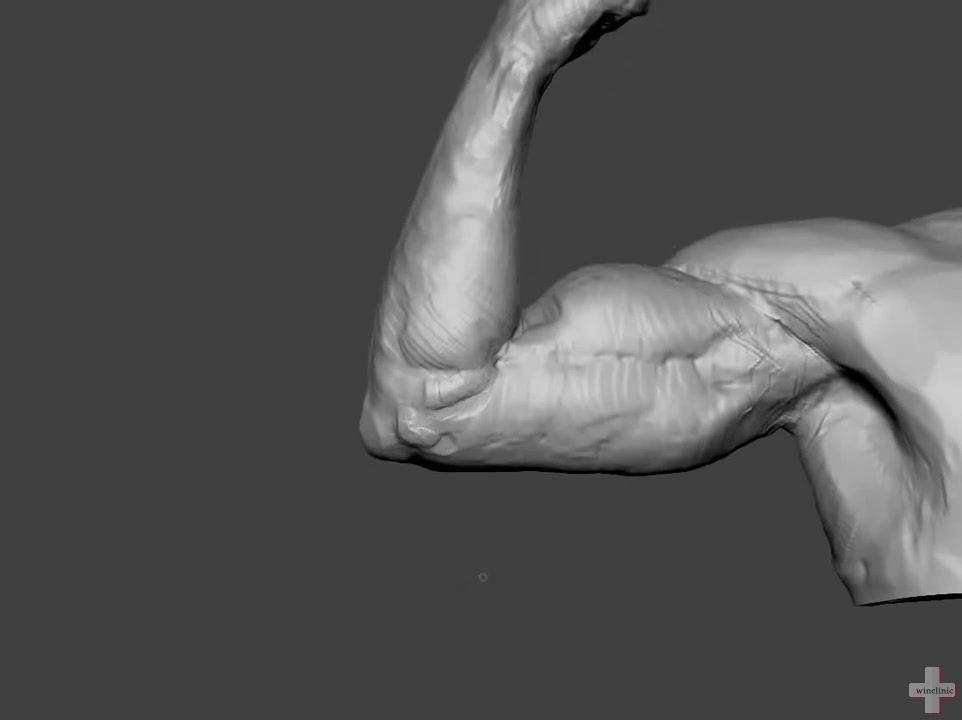 功能解剖:骨骼肌背诵大全